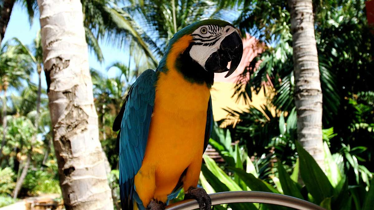6 Reasons to visit the Palm Beach Zoo this summer